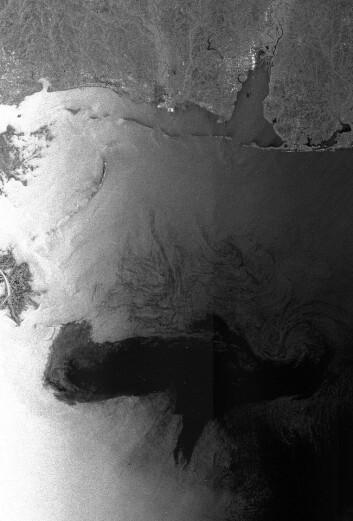 Envisats radarbilde av oljekatastrofen. 28 April 2010, kl 03:45 UTC (Foto:ESA)