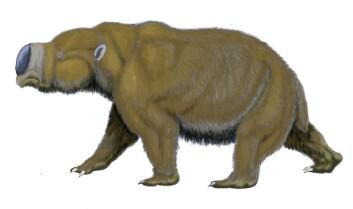 """""""Slik tror man gigantgnageren Diprotodon optatum så ut. Den kunne bli på størrelse med en flodhest. (Illustrasjon: Dmitry Bogdanov/Wikimedia Commons)"""""""