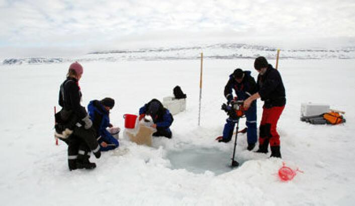 Forskerne på feltarbeid i Rijpfjorden på Nordaustlandet (Svalbard). (Foto: Jørgen Berge/UNIS)