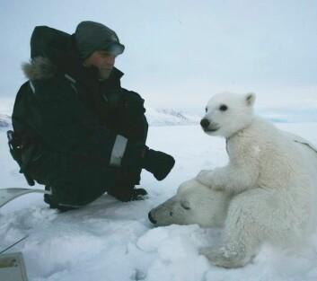 """Binne """"N23689"""" sammen med datteren som hun trolig mistet senere på året. Til venstre biolog Magnus Andersen. (Foto: Jon Aars/Norsk Polarinstitutt)"""