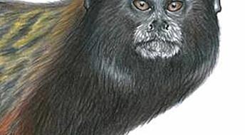 Ny ape beskrevet