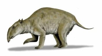 """""""Palorchestes azael lignet på en tapir, men ble over 2,5 meter lang.(Illustrasjon: Nobu Tamura/Wikimedia Commons)"""""""