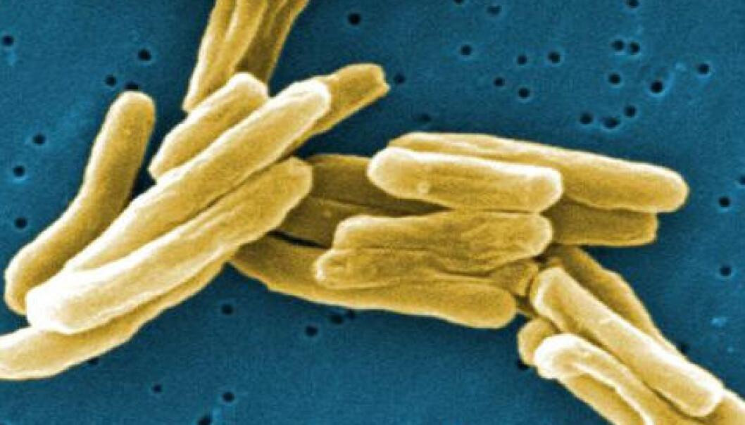 Fortsatt dør 1,8 millioner av tuberkulose