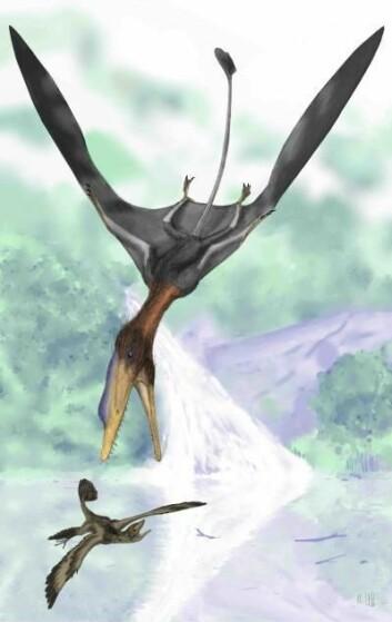 """""""Slik kan Darwinopterus ha sett utda i jakten på en hårete, liten flyvende dinosaur. (Illustrasjon: Mark Witton, University of Portsmouth)"""""""