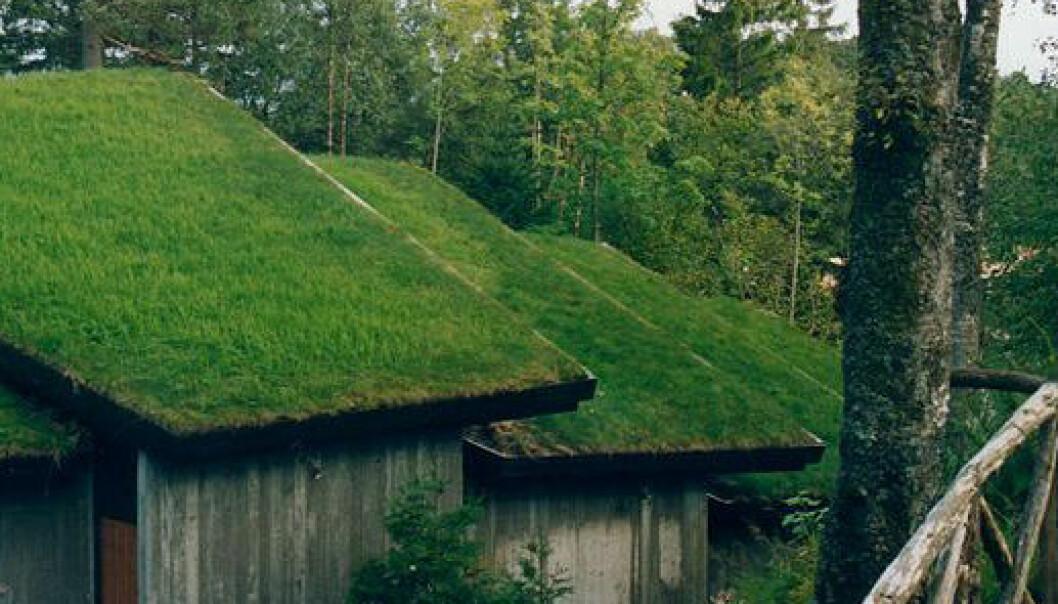 Grønne tak reduserer CO2-nivået