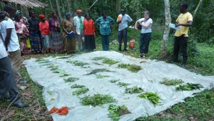 Ulike plantemedisiner brukes mot malaria. Her samler Torunn Stangeland og kollegaene i Uganda inn planter som de skal analysere. (Foto: Maud Kamatenesi-Mugisha)