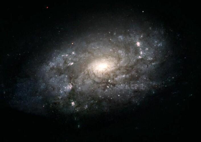 Dette er spiralgalaksen NGC 3949 - en galakse som ligner på Melkeveien. Som vår egen galakse, har den en blå disk med unge stjerner, pepret med rosa regioner for stjernefødsler. I motsetning til den blå disken, er den lyse, sentrale utbulningen (magen) stort sett sammensatt av eldre, rødere stjerner. (Foto: NASA, ESA og The Hubble Heritage Team (STScI/AURA))