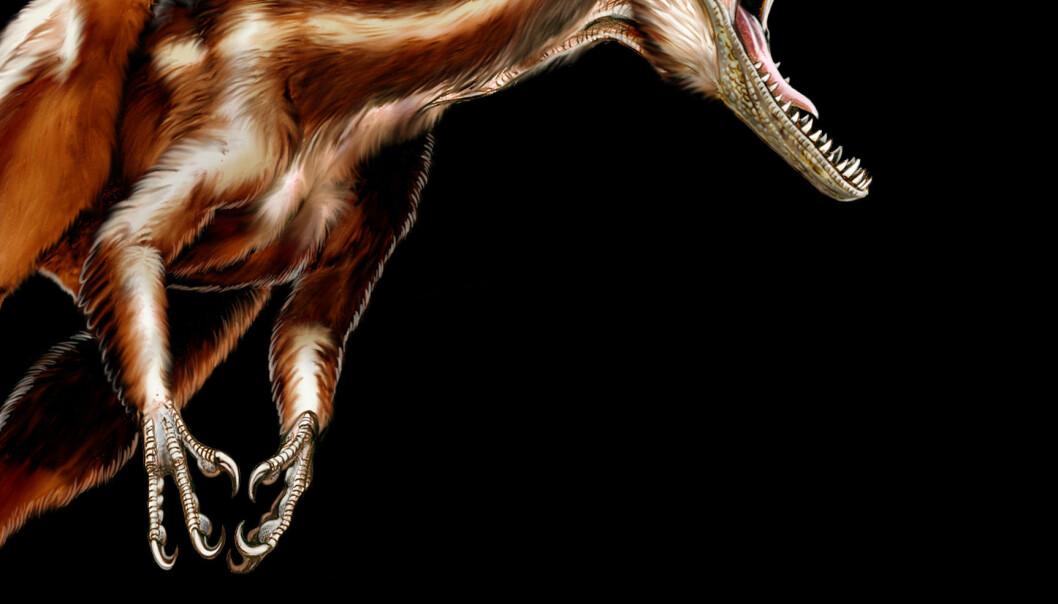 Slik antar forskerne at den har sett ut, theropoden Tawa hallae, som levde for 215 millioner år siden. (llustrasjon: Jorge Gonzalez)