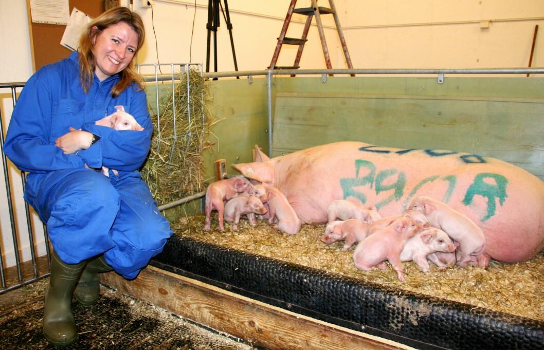 Inger Lise Andersen vil gjøre perioden etter fødselen så bra som mulig for både grisemor og grisunger. Den svarte terskelen utgjør skillet mellom redeområdet og aktivitetsområdet. (Foto: Elin Fugelsnes)