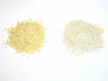 """""""Den ene haugen består av ris med en kjent genmodifisering, men hva med den andre? Har den en ukjent genmodifisering?"""""""