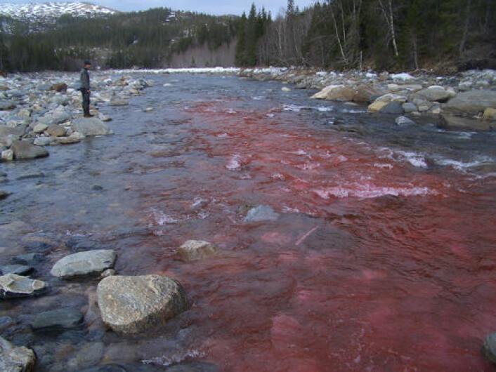 Det fluoriserende stoffet viser hvordan rotenon vil fordele seg i vannet. (Foto: Geir Vatne)