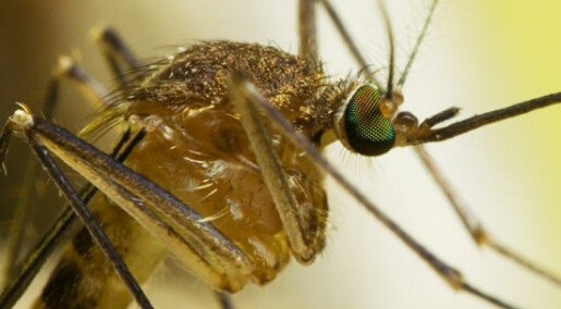 Advarer mot  myggmiddel