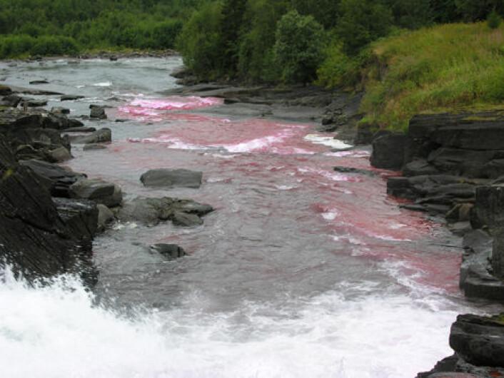 Fordelingen av stoffet blir påvirket av strømmer i vannet. (Foto: Geir Vatne)