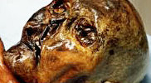 Ötzi har ingen slektninger