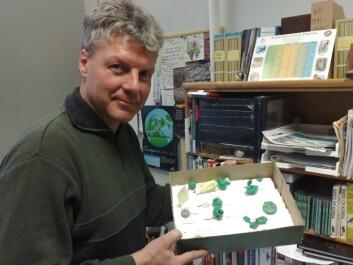 Husby benyttet kun kunstige reir, hvert med ett naturlig egg (av vaktel) og ett av plastilin. (Foto: Bjørnar Leknes)