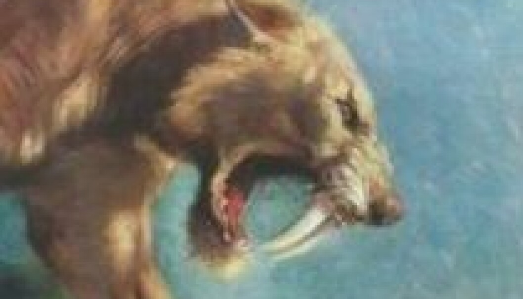 Denne illustrasjonen av Charles Knight viser en sabeltannkatt av arten Smilodon fatalis.(Charles Knight/American Museum of Natural History/Wikimedia Commons)