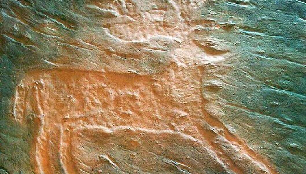 Gipsavstøpning av en innrisset hjort fra Valcamonica. (Foto: Wikimedia Commons)