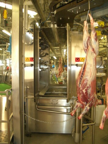 Varmtvannspasteuriseringskammer for lammeslakt. Metoden reduserer E. coli nesten hundre prosent. (Foto: Grethe Ringdal, Animalia)