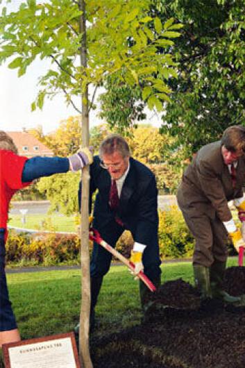 Som åpning av Forskningsdagene 1995 plantet daværende forskningsminister Gudmund Hernes Kunnskapens tre i Tøyen kulturpark. Han fikk hjelp av daværende informasjonsdirektør Paal Alme. Foto: Morten Ryen