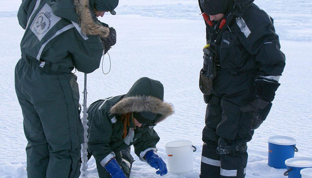 Prøvene ble tatt på Svalbard, to mil fra Ny Ålesund. (Foto: Privat)