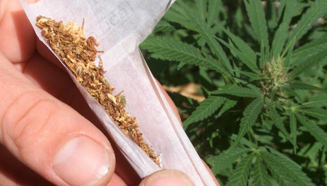 Det er svært splittede meninger om cannabis. Noen kaller det en harmløs urte, andre et farlig narkotikum.Foto: colourbox