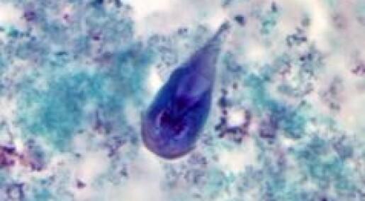 Fant hardføre Giardia-varianter