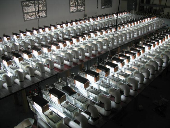 Laboratoriet med miniatyrbekkene. (Foto: Bradley Cardinale)
