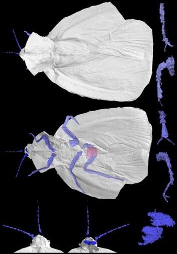"""""""Slik ser rekonstruksjonen av urkakerlakken ut. (Illustrasjon: Imperial College London/Natural History Museum)"""""""