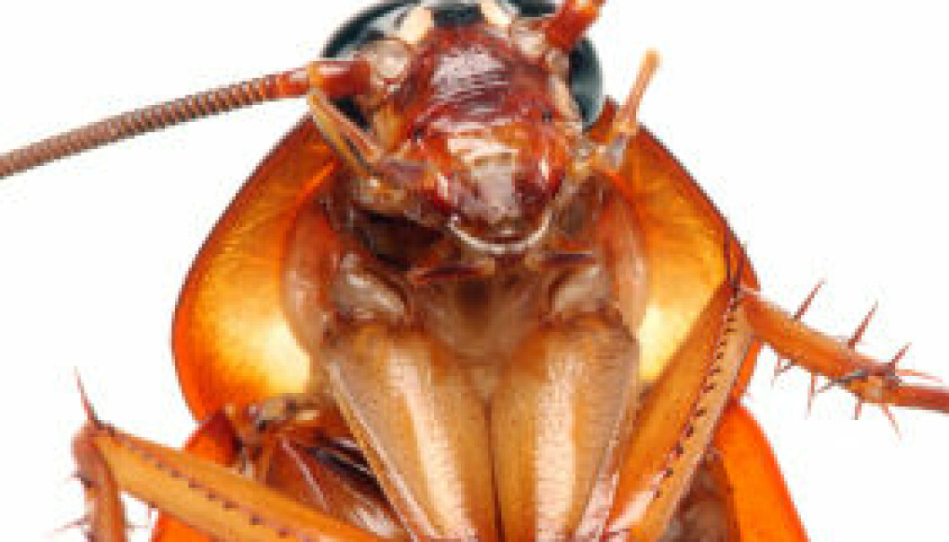 Virtuell urkakerlakk