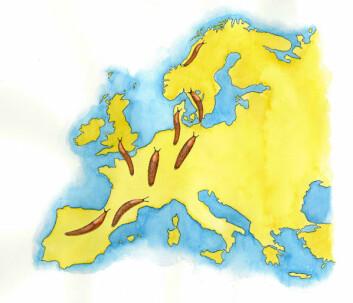 Iberiaskogsneglen har spredt seg fra Sør-Europa til langt nord i Skandinavia. (Illustrasjon: Hermod Karlsen/Bioforsk)