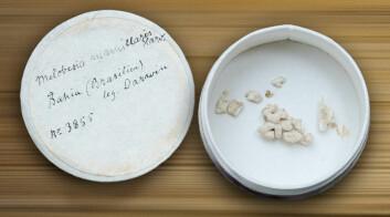 Algene er både små og uanselige - men kanskje de eneste av Darwins innsamlingsobjekter som finnes i Norge. (Foto: Jan Christian Sørlie)