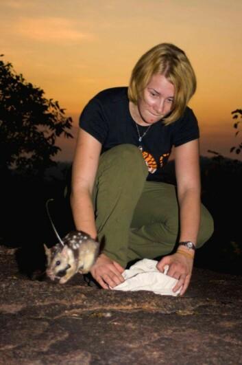 Ut i det fri og opplært å sky padder. Forsker Stephanie O'Donell slipper løs en pungmår i Mary River National Park i Australias Northern Territory.