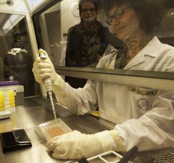 Avexxin-ansatt Astrid J. Feuerherm og Berit Johansen (i bakgrunnen) håper forskningen deres vil føre til nye medisiner mot kroniske betennelsessykdommer. (Foto: Per Harald Olsen)