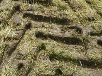 Fuktig jord er svært utsatt for pakking ved traktorkjøring. (Foto: Sissel Hansen)