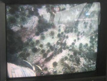 På en skjerm ser operatøren havbunnen. (Foto: Nofima)