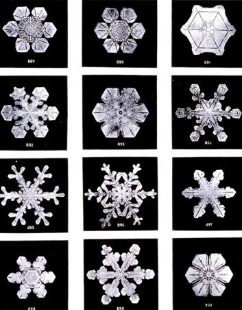 """Noen av de over 5000 snøfnuggbildene Wilson Bentley tok for rundt hundre år siden. (Foto: Wilson Bentley)"""