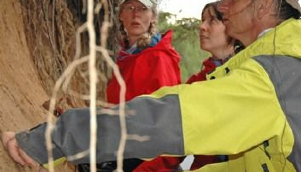 Eiliv Larsen (nærmest), Astrid Lyså (t.v.) og Maria Jensen. Feltarbeid Russland 2007. (Foto: Gumdund Løvø/NGU)
