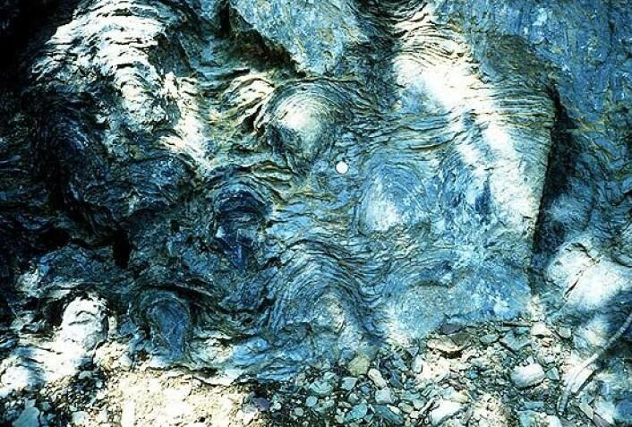 Virveldyr oppstod i prekambrium, men det prekambriske eonet er mest kjent for sine fossile stromatolitter. (Foto: P. Carrara)
