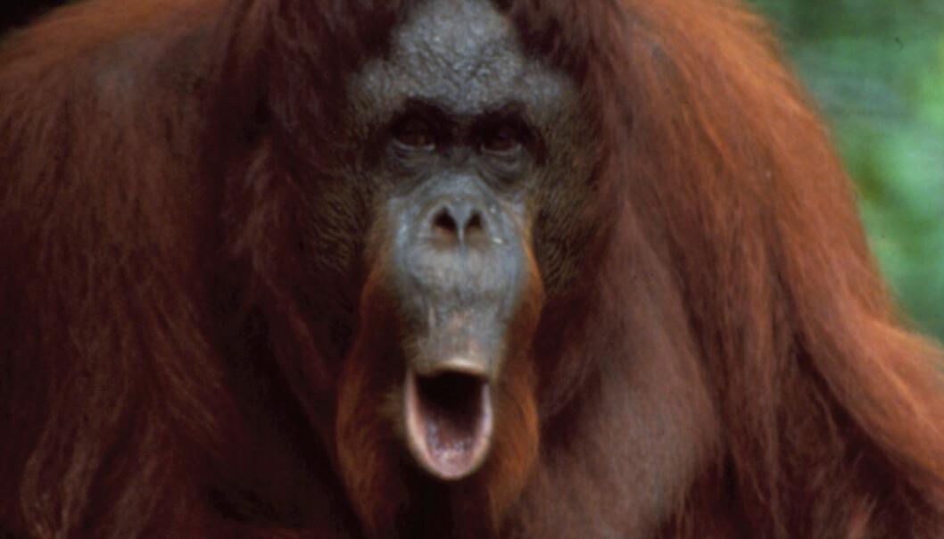 Aper ler også