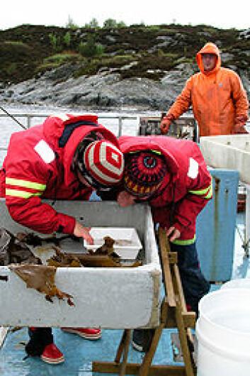 """mai 2008 under kurset """"Marine dager"""" ved Universitetet i Bergen, ombord av UiBs/Havforskningsinstituttets forskningsskip Hans Brattström."""