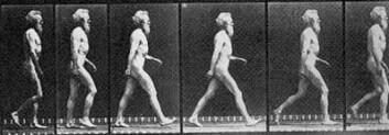 Klassisk energisparende gange for oss tobente. Her ses den engelske fotografen Eadweard Muybridge (1830-1904). Her har han tatt bilder av seg selv med flere kameraer for å vise bevegelse. De aller fleste av oss mennesker setter hælen først i bakken når vi går. (Foto: E. Muybridge)