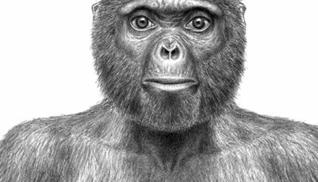 Vår nye, felles stammor Ardi er den eldste menneskelignende skapning vi kjenner til som gikk på to bein. Hun levde i et åpent skoglandskap, ikke på savannen. (Illustrasjon: J. H. Matternes/Science)