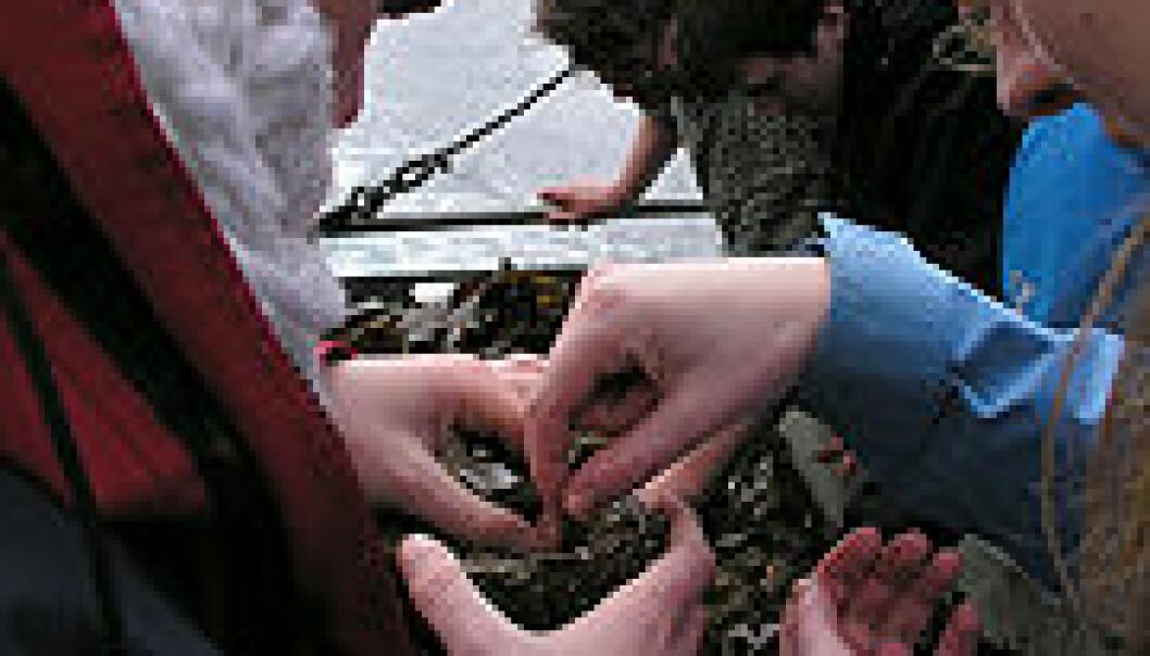 """mai 2008 under kurset """"Marine dager"""" ved Universitetet i Bergen, ombord av UiBs/Havforskningsinstituttets forskningsskip Hans Brattström"""