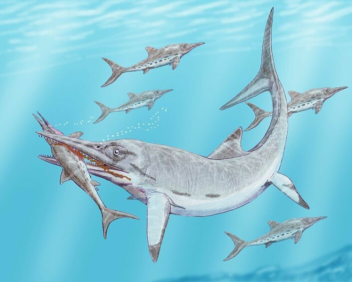 Ichthyosauren Temnodontosaurus burgundiae, og den noe mindre Stenopterygius hauffianus (Illustrasjon: Dmitry Bogdanov)