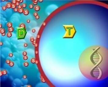 Et fotosensibiliserende stoff (s) og medisinen (D) blir sprøytet inn i kroppen.