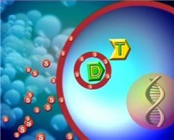 Medisinen og det fotosensibiliserende stoffet blir tatt opp i cellene.