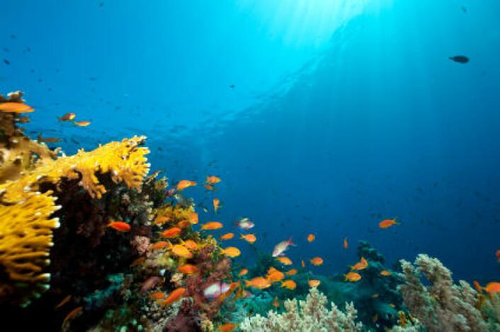 Hvordan skal marine miljøer vernes?(Illustrasjonsfoto: iStockphoto)