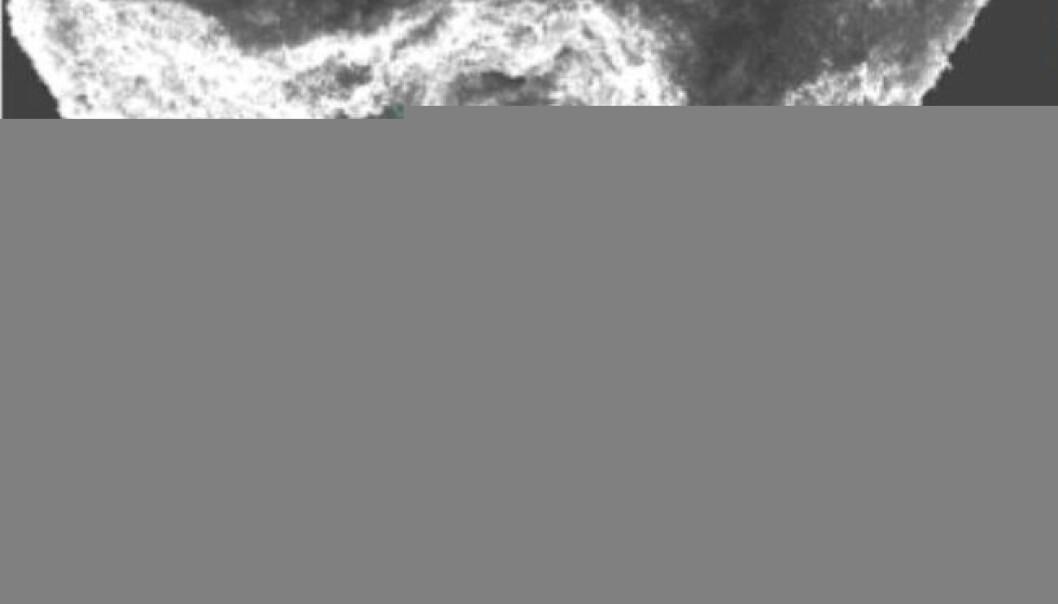 """""""Karakterisering av partikkel fra Tel'kem, Semipalatinsk. De mørke områdene i det nederste bildet indikerer høyeste konsentrasjoner av plutonium. Bildet øverst er tatt med elektronmikroskop ved IPM, NLH, mens bildet under er laget ved hjelp av synkrotronbasert mikro-røntgen fluorescens ved synkrotronen i Hamburg (HASYLAB) og viser fordelingen av plutonium i partikkelen."""""""