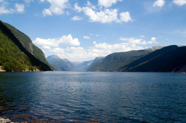 - Hardangerfjorden har blitt et ikon, mener oppdrettere. (Foto: Colourbox.no)