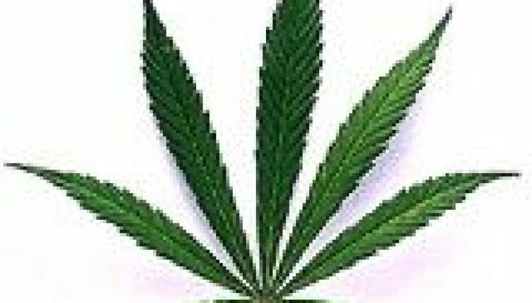 Cannabis kan ha positiv effekt på MS